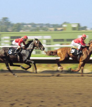 Commonly Used Horse Racing Gambling Terms